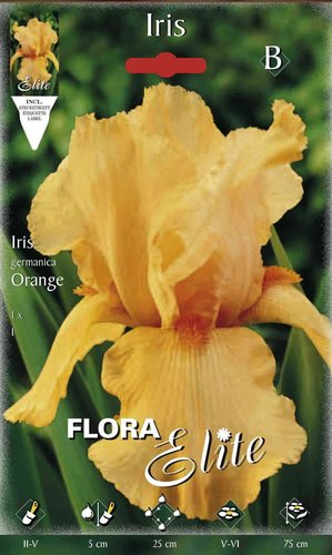 215600 IRIS GERMANICA ORANGE