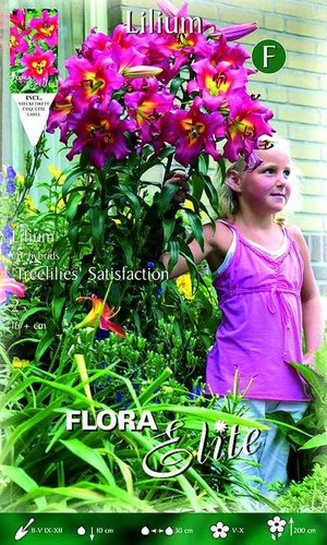 217150 LILIEN-OT HYBRIDEN SATISFACTION