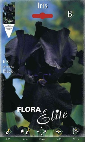 215480 IRIS GERMANICA BLACK