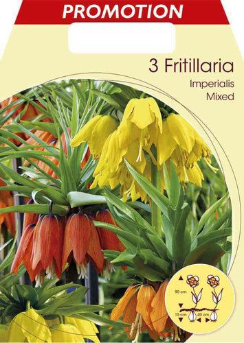 PROMOTION FRITILLARIA imperialis Prachtmischung