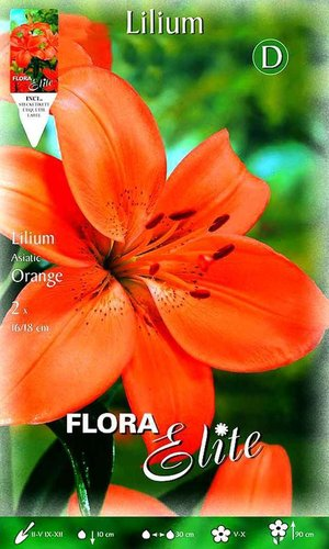 216640 LILIEN ASIATISCHE HYBRIDEN ORANGE